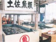 活魚水槽約30,000L