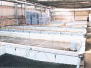 アワビ飼育水槽5,000L×6台