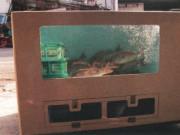 ワンボックス型活魚水槽600L